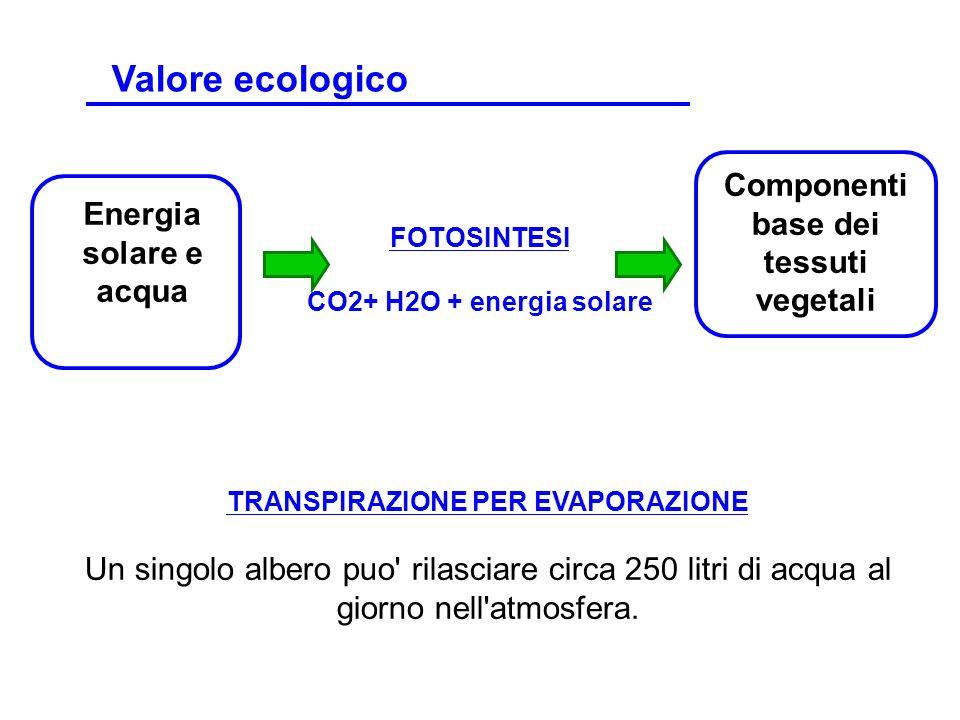 Componenti base dei tessuti vegetali TRANSPIRAZIONE PER EVAPORAZIONE