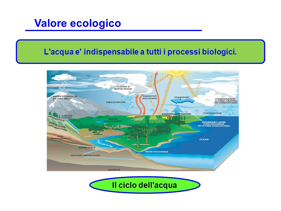 L acqua e indispensabile a tutti i processi biologici.