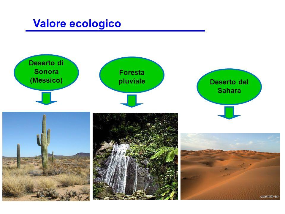 Deserto di Sonora (Messico)