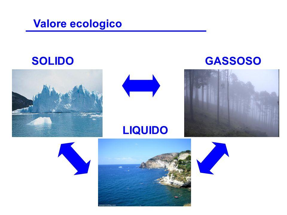 Uno de estos ecosistemas o mundos particulares es el Mediterráneo.