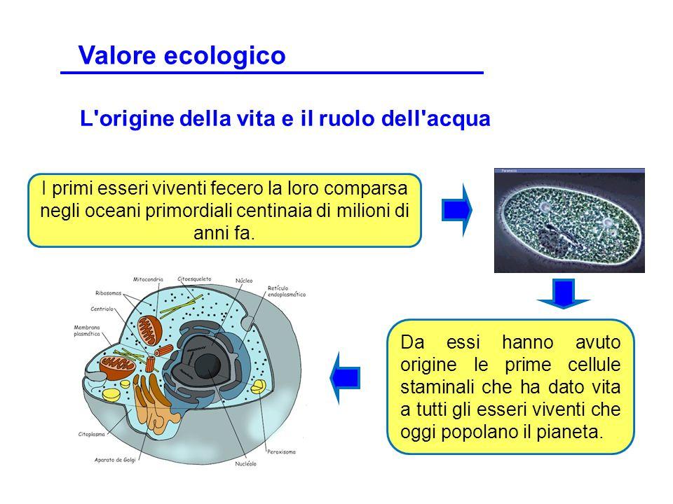 Valore ecologico L origine della vita e il ruolo dell acqua