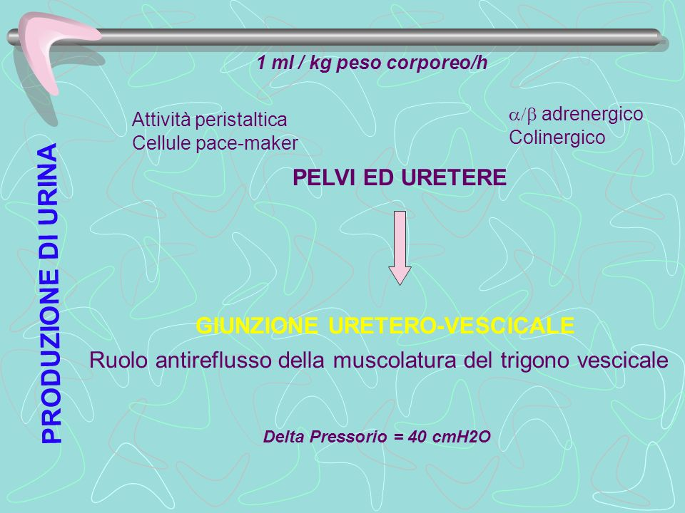 GIUNZIONE URETERO-VESCICALE