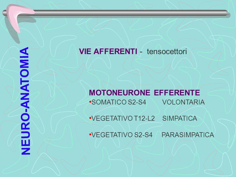 NEURO-ANATOMIA VIE AFFERENTI - tensocettori MOTONEURONE EFFERENTE