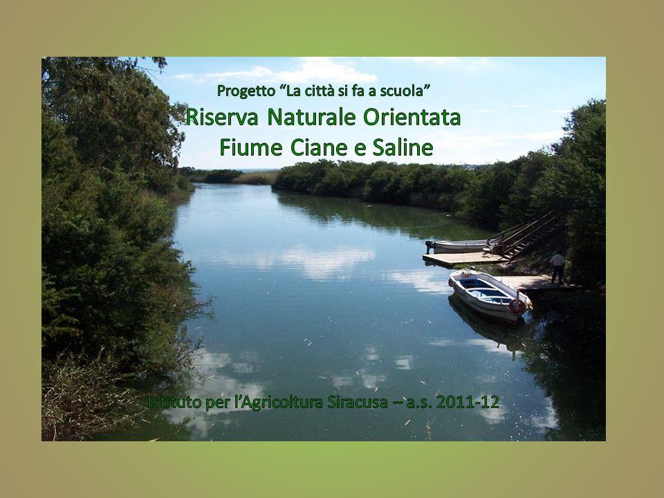Progetto La città si fa a scuola Riserva Naturale Orientata Fiume Ciane e Saline Istituto per l'Agricoltura Siracusa – a.s.