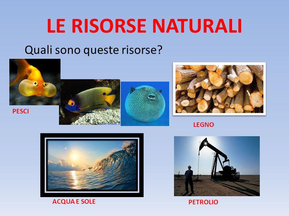 LE RISORSE NATURALI Quali sono queste risorse PESCI LEGNO