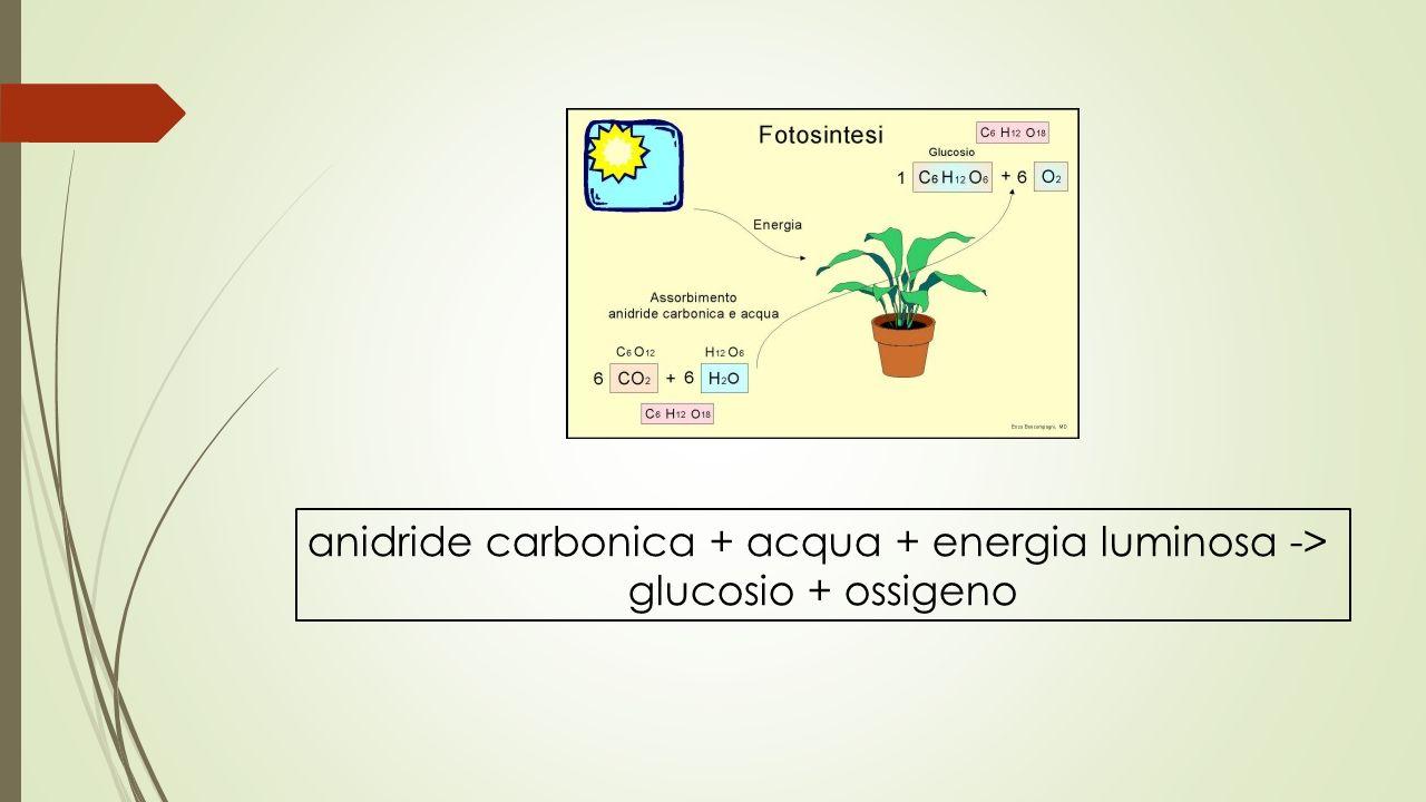 anidride carbonica + acqua + energia luminosa ->