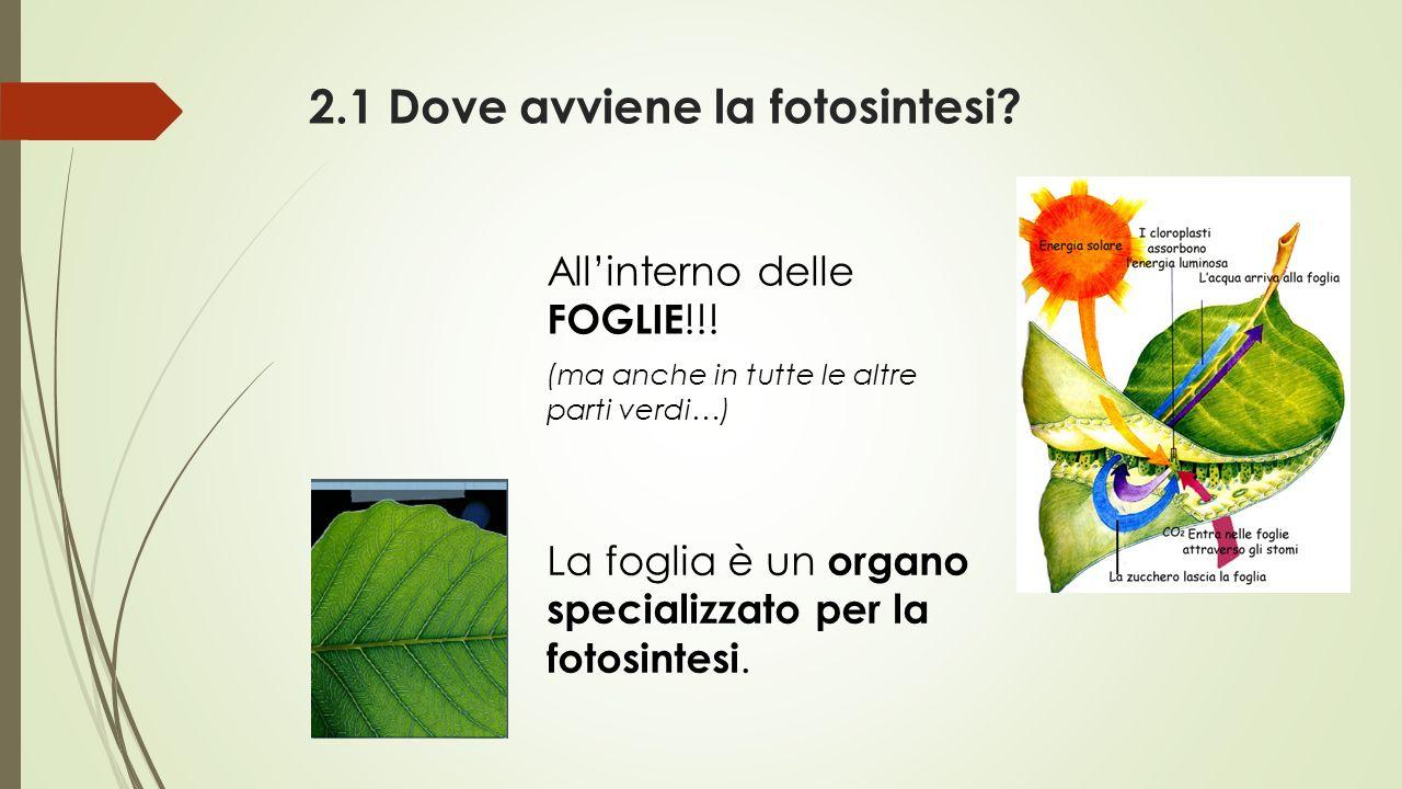 2.1 Dove avviene la fotosintesi