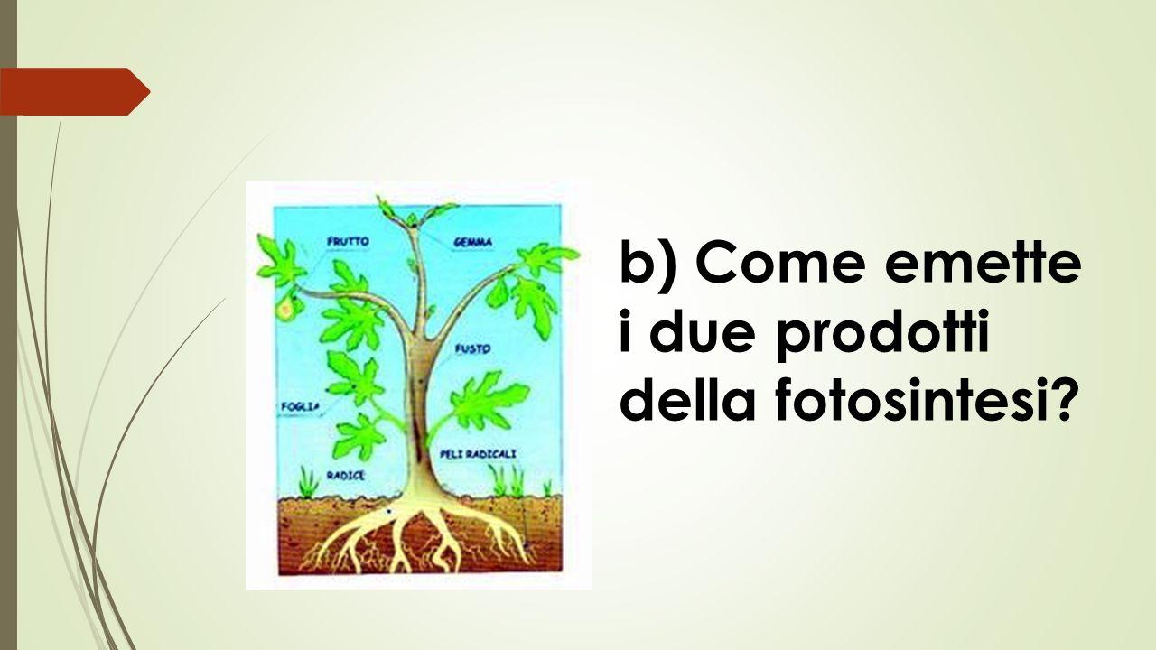 b) Come emette i due prodotti della fotosintesi