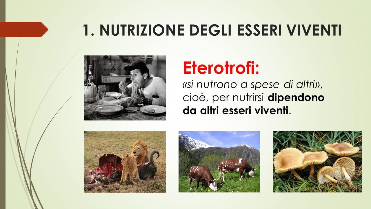 1. NUTRIZIONE DEGLI ESSERI VIVENTI