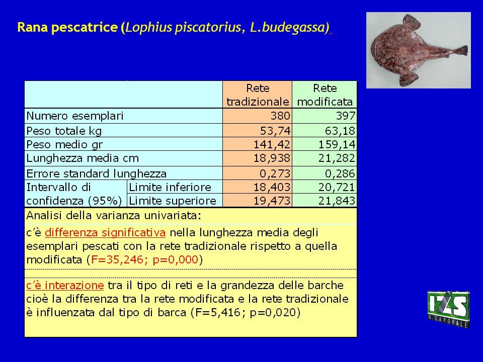 Rana pescatrice (Lophius piscatorius, L.budegassa)