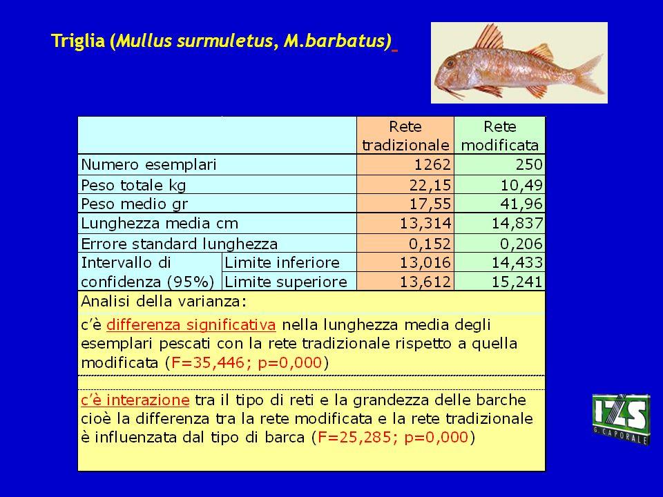 Triglia (Mullus surmuletus, M.barbatus)