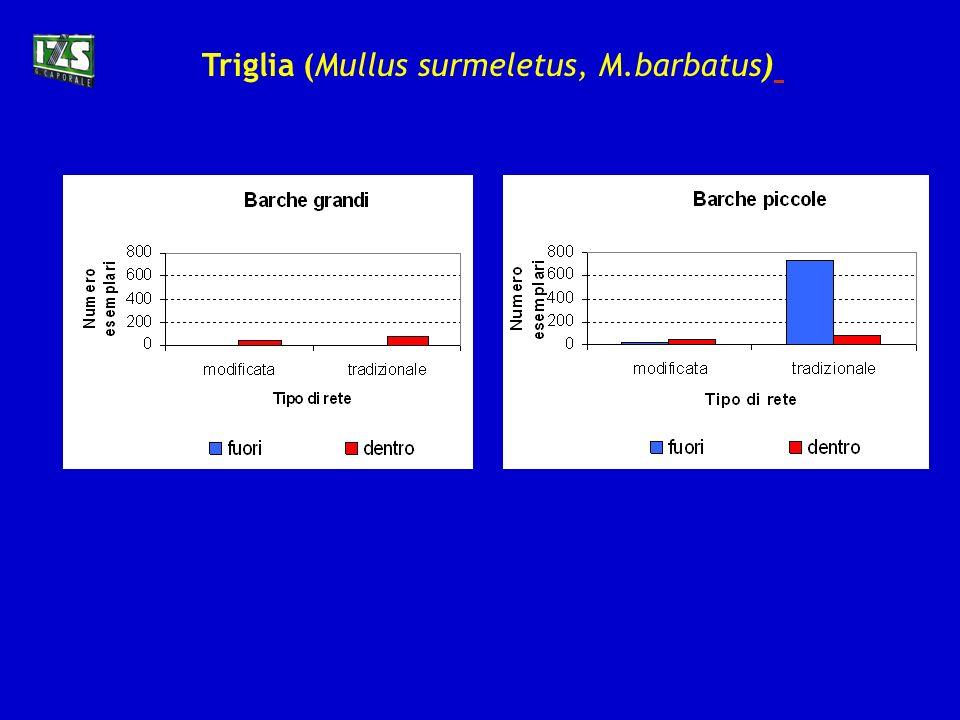 Triglia (Mullus surmeletus, M.barbatus)