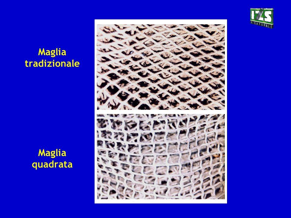 Maglia tradizionale Maglia quadrata