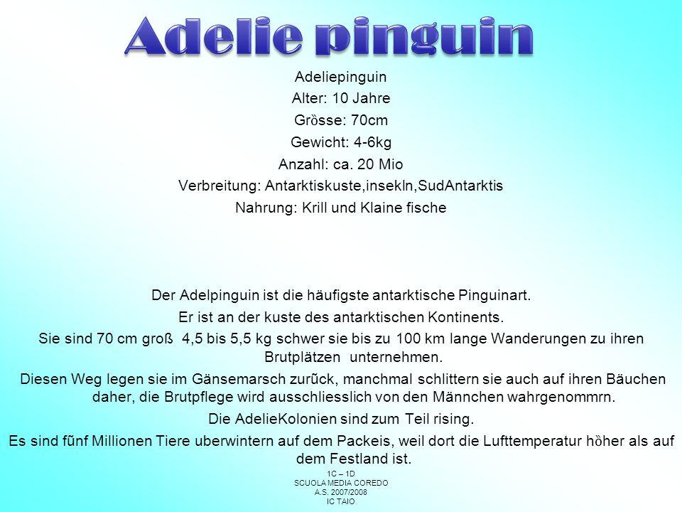 Adelie pinguin Adeliepinguin Alter: 10 Jahre Grȍsse: 70cm