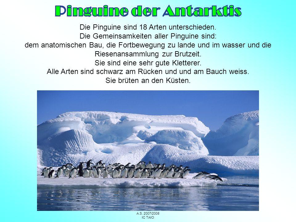 Pinguine der Antarktis