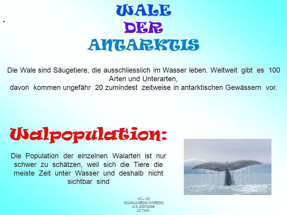 Walpopulation: WALE DER ANTARKTIS