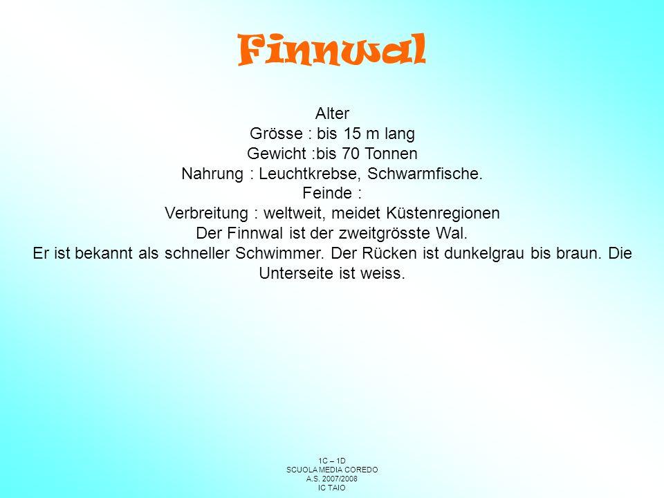 Finnwal Alter Grösse : bis 15 m lang Gewicht :bis 70 Tonnen
