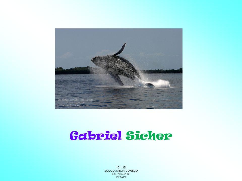 Gabriel Sicher 1C – 1D SCUOLA MEDIA COREDO A.S. 2007/2008 IC TAIO 61