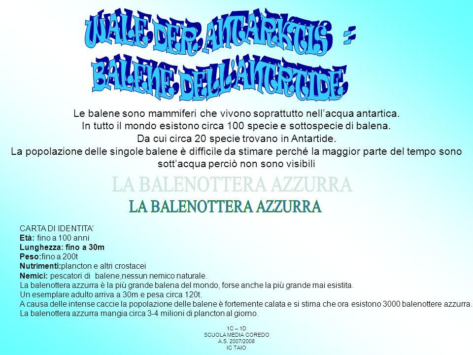 WALE DER ANTARKTIS = BALENE DELL ANTRTIDE LA BALENOTTERA AZZURRA