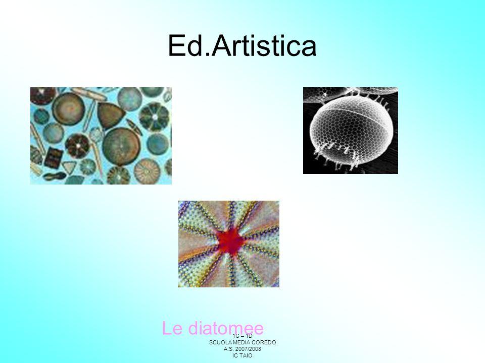 Ed.Artistica Le diatomee
