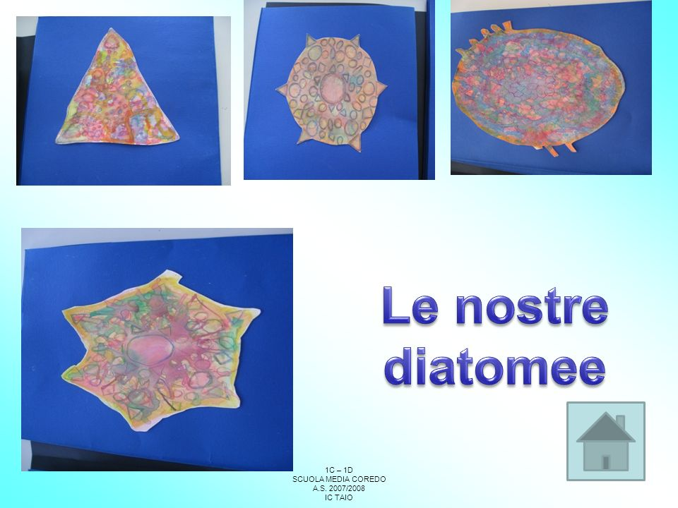Le nostre diatomee 77 1C – 1D SCUOLA MEDIA COREDO A.S. 2007/2008
