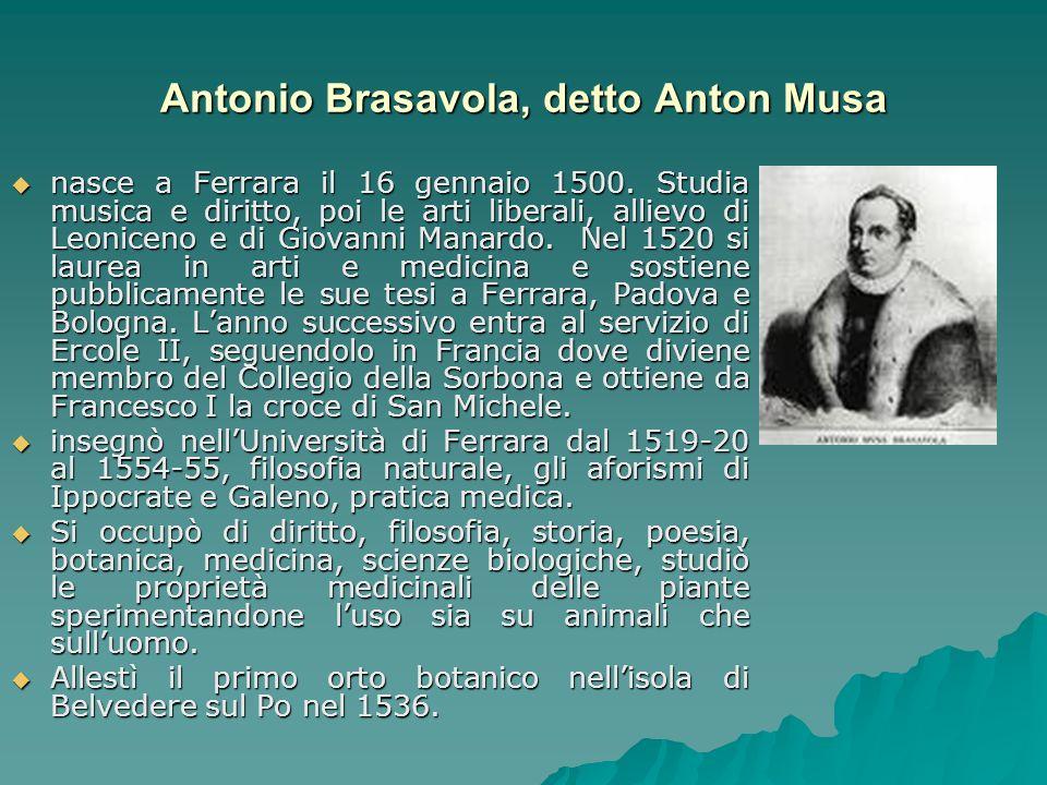 Antonio Brasavola, detto Anton Musa
