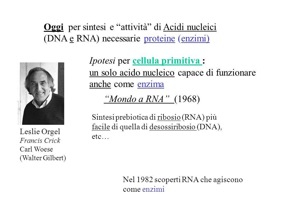 Ipotesi per cellula primitiva :