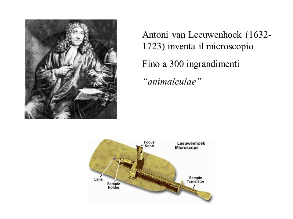 Antoni van Leeuwenhoek (1632-1723) inventa il microscopio