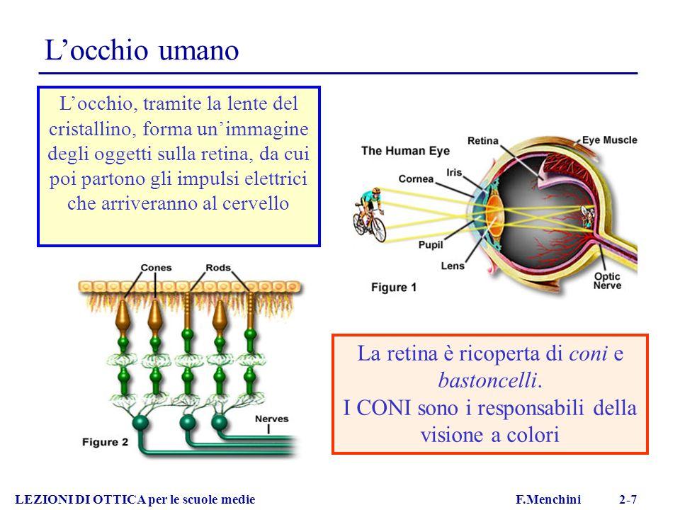 L'occhio umano La retina è ricoperta di coni e bastoncelli.