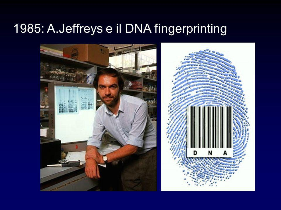 1985: A.Jeffreys e il DNA fingerprinting
