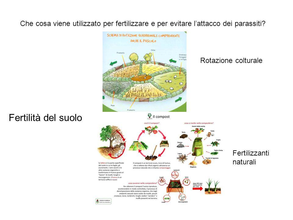 Che cosa viene utilizzato per fertilizzare e per evitare l'attacco dei parassiti