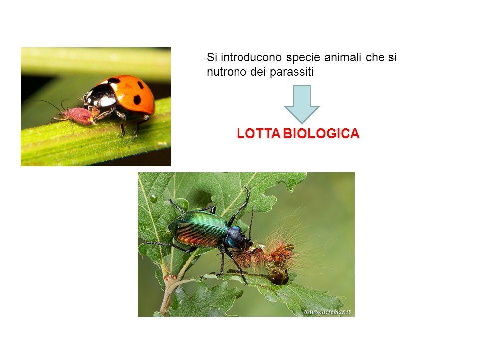 Si introducono specie animali che si nutrono dei parassiti