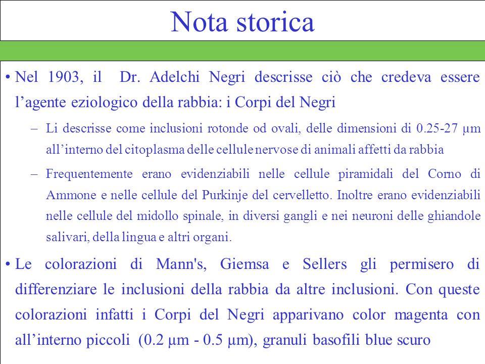 Nota storica Nel 1903, il Dr. Adelchi Negri descrisse ciò che credeva essere l'agente eziologico della rabbia: i Corpi del Negri.