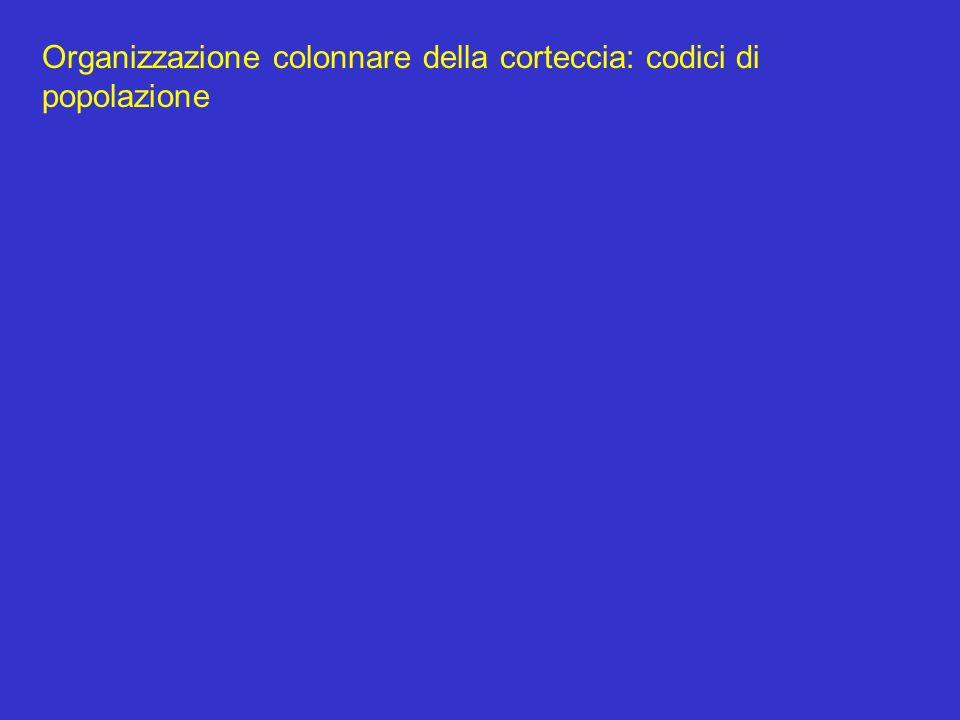 Organizzazione colonnare della corteccia: codici di popolazione