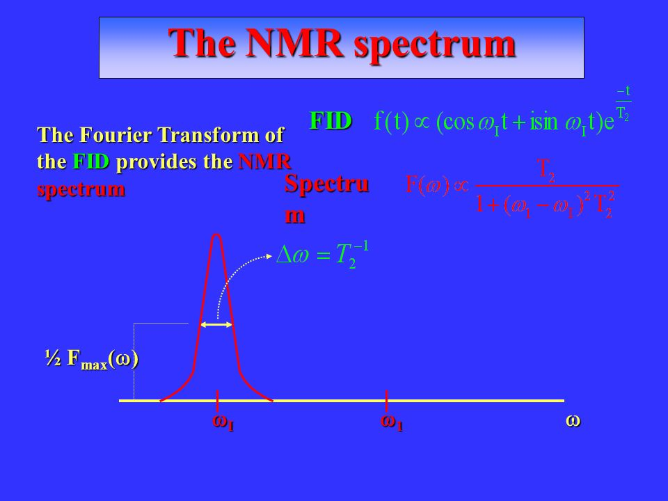 The NMR spectrum FID Spectrum