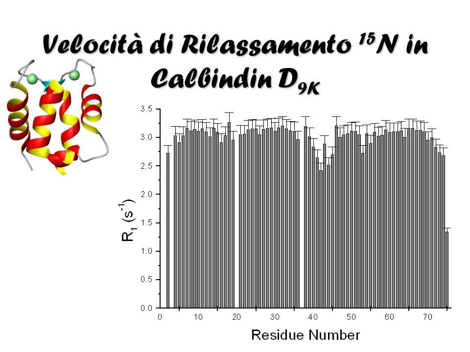 Velocità di Rilassamento 15N in Calbindin D9K