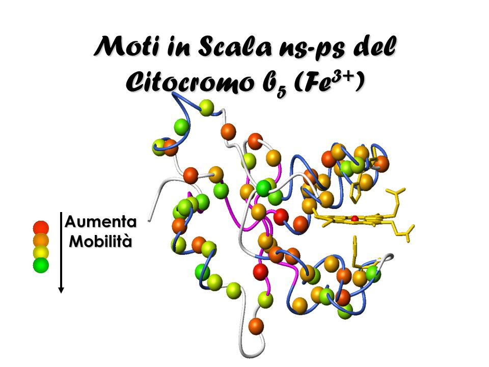 Moti in Scala ns-ps del Citocromo b5 (Fe3+)