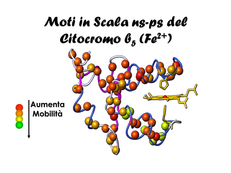 Moti in Scala ns-ps del Citocromo b5 (Fe2+)