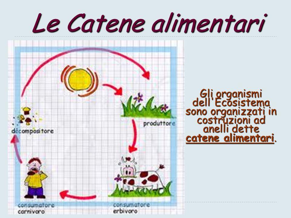 Le Catene alimentari Gli organismi dell Ecosistema sono organizzati in costruzioni ad anelli dette catene alimentari.