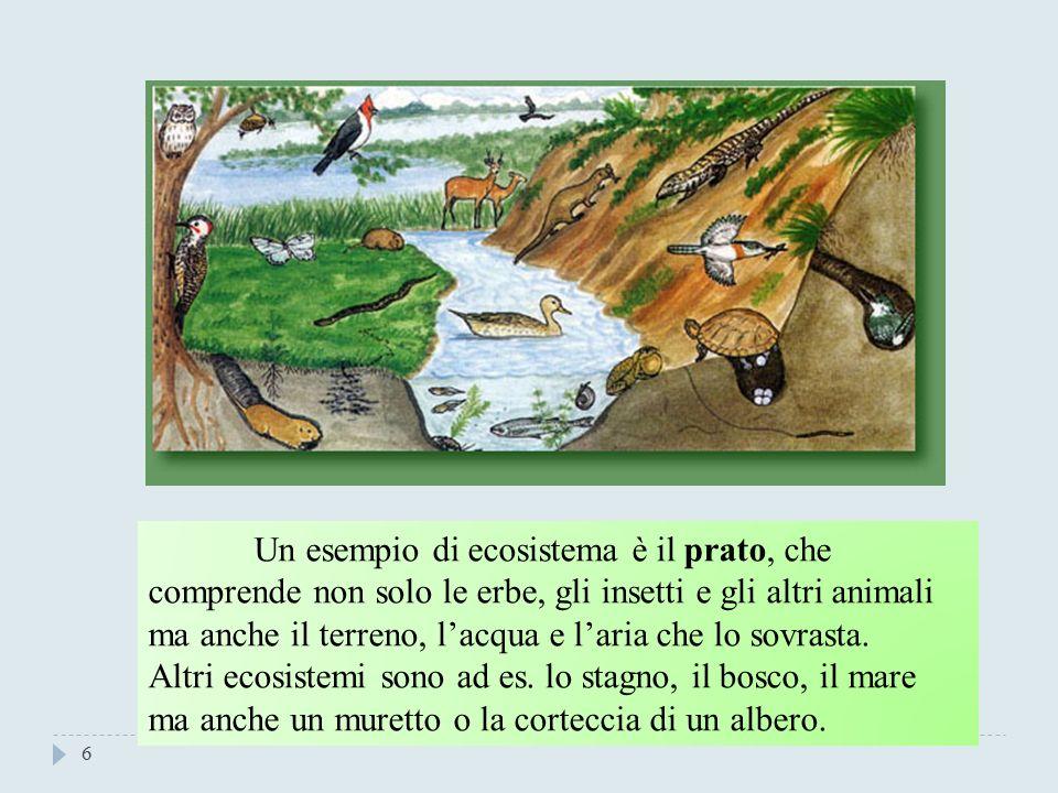 Un esempio di ecosistema è il prato, che comprende non solo le erbe, gli insetti e gli altri animali ma anche il terreno, l'acqua e l'aria che lo sovrasta.