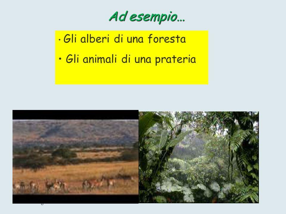 Gli alberi di una foresta Gli animali di una prateria