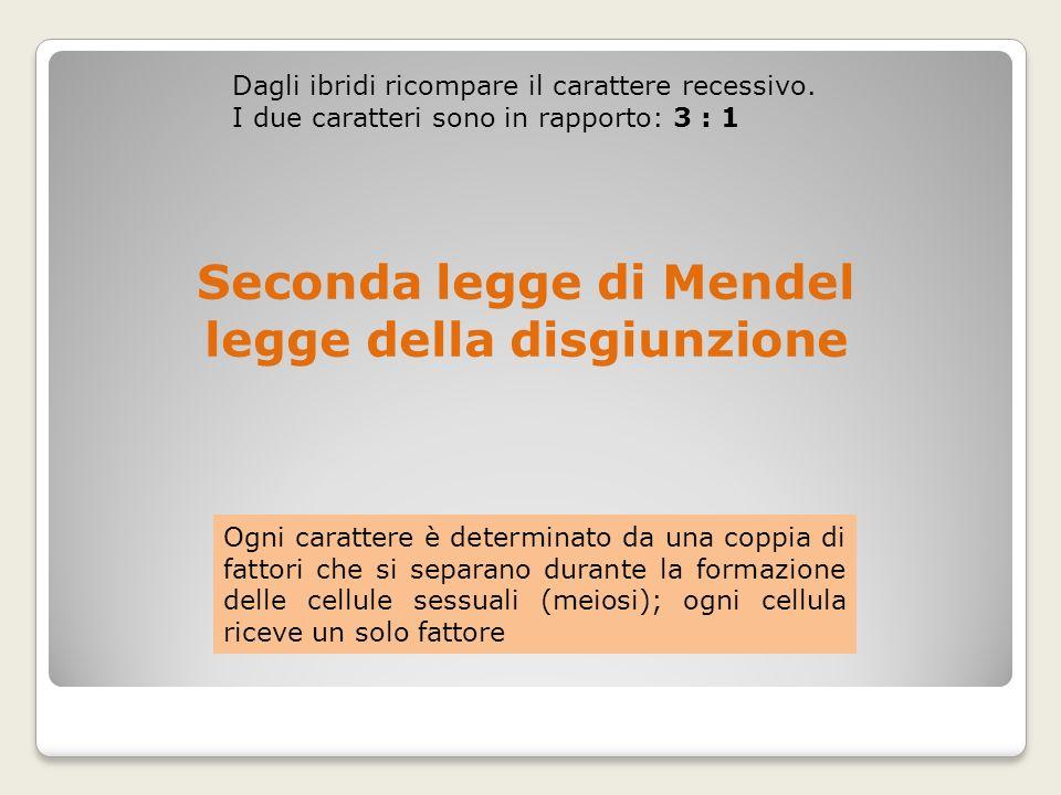 Seconda legge di Mendel legge della disgiunzione