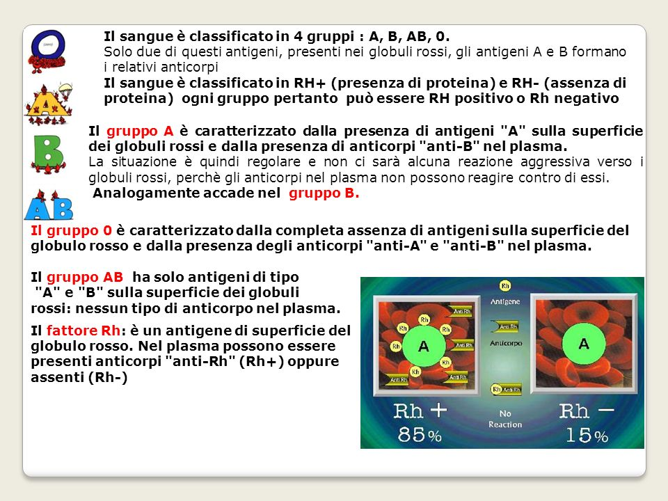 Il sangue è classificato in 4 gruppi : A, B, AB, 0.