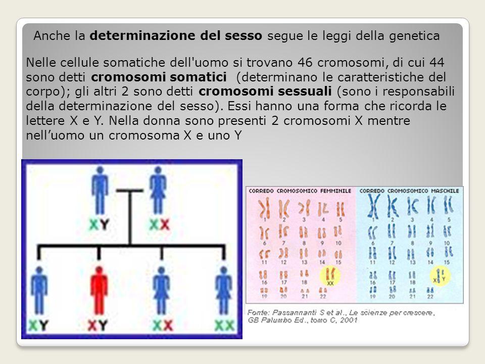 Anche la determinazione del sesso segue le leggi della genetica