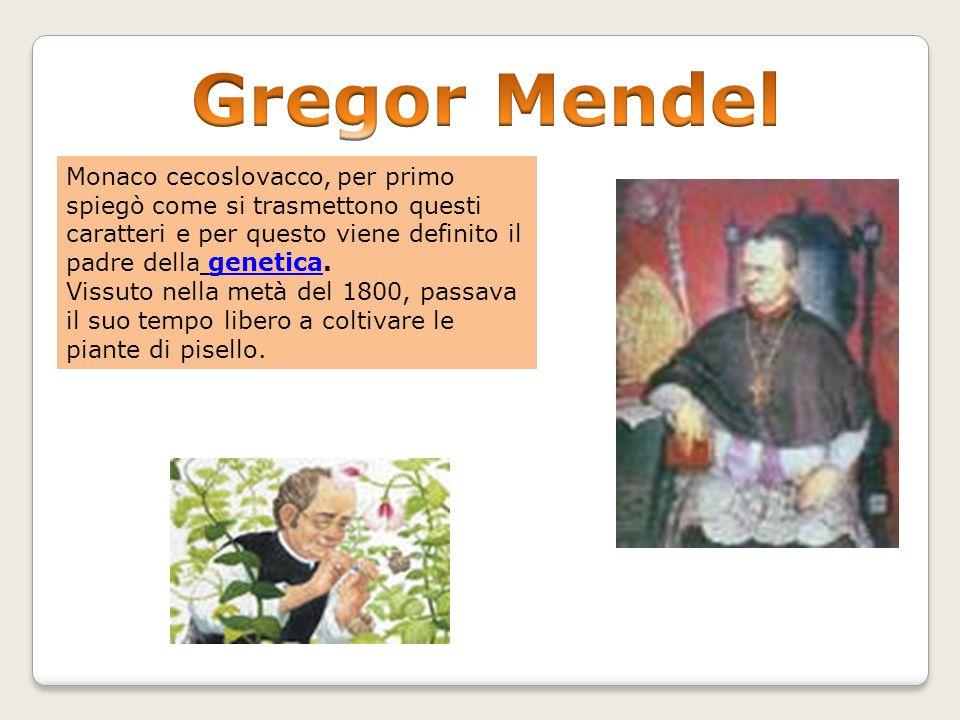Gregor Mendel Monaco cecoslovacco, per primo spiegò come si trasmettono questi caratteri e per questo viene definito il padre della genetica.