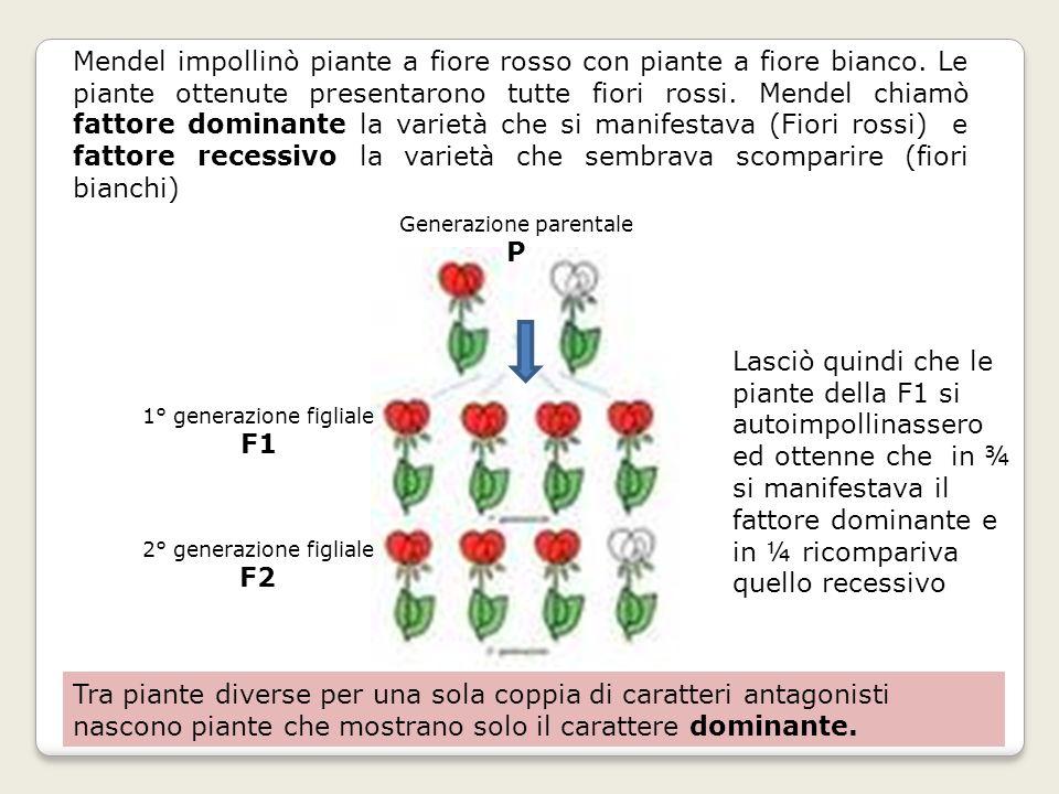 Tra piante diverse per una sola coppia di caratteri antagonisti
