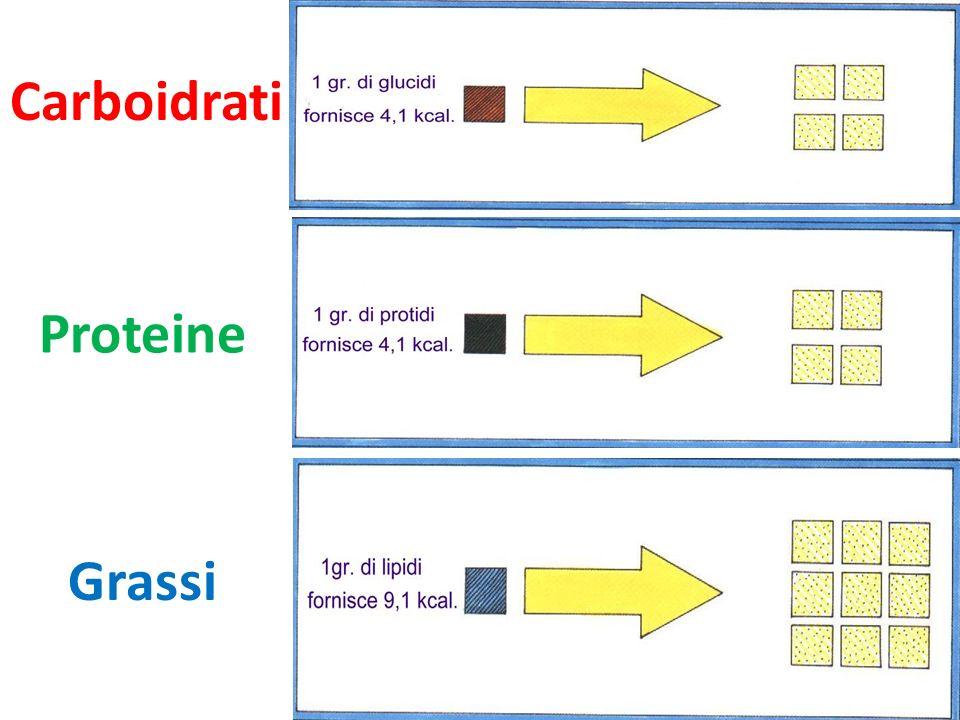Carboidrati Proteine Grassi