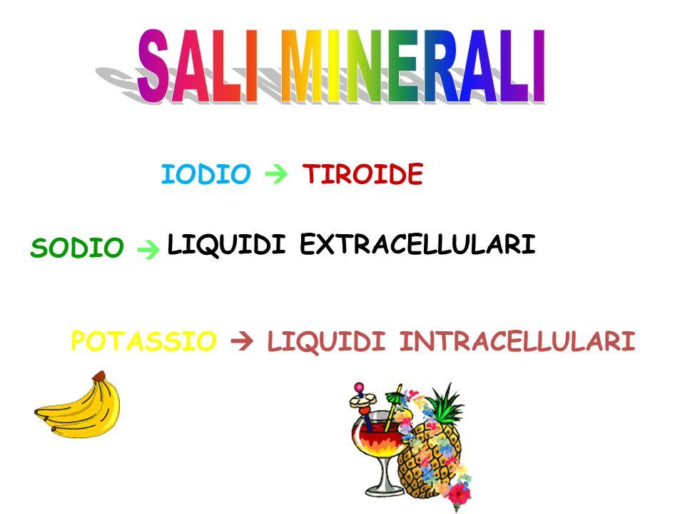 SALI MINERALI IODIO  TIROIDE LIQUIDI EXTRACELLULARI SODIO 