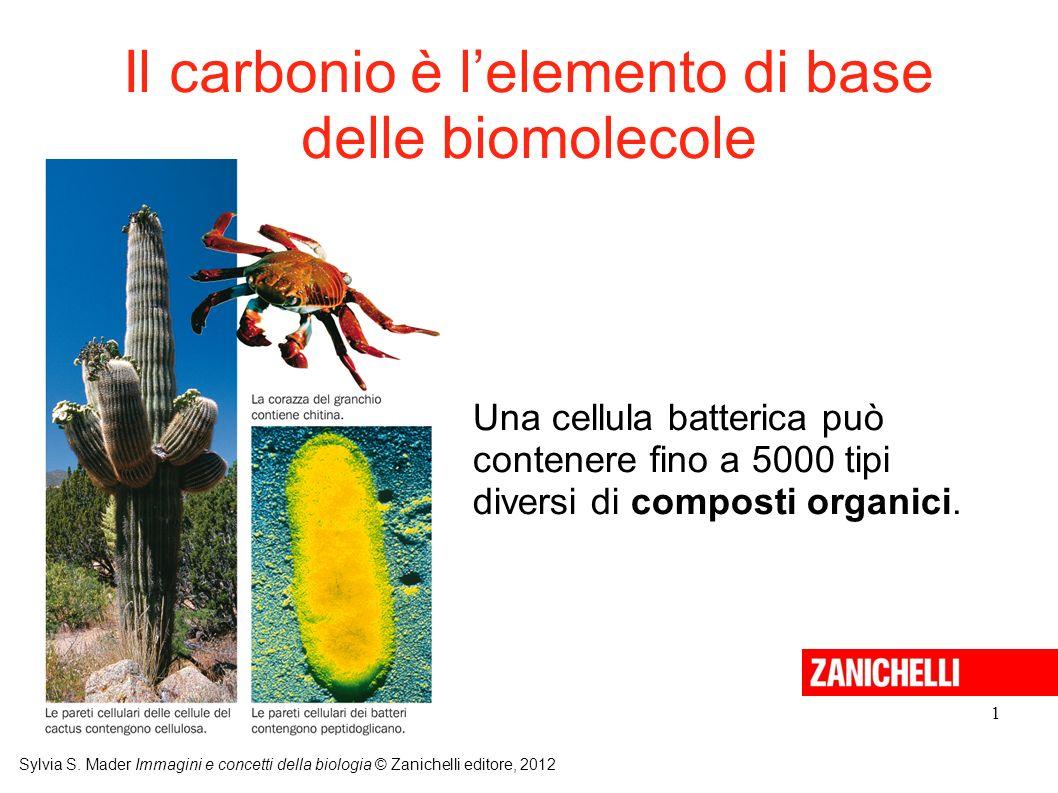 Il carbonio è l'elemento di base delle biomolecole