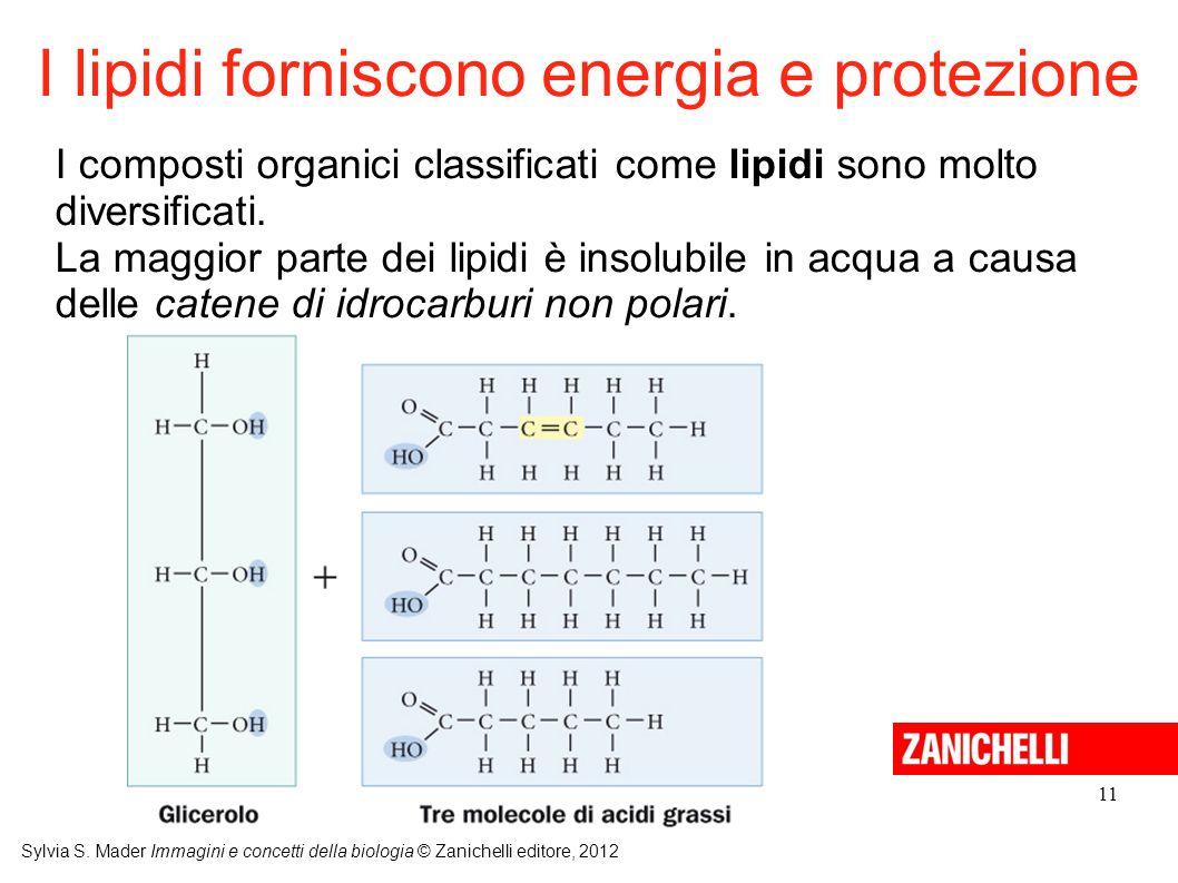 I lipidi forniscono energia e protezione